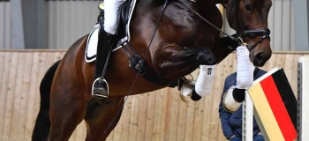 Four Helgstrand stallions at 35-day test